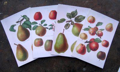 Herefordshire Pomona Postcards