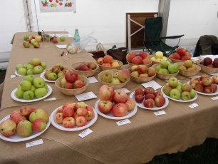 apple-display